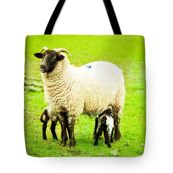 Ewe and lambs Tote Bag by Tom Gowanlock