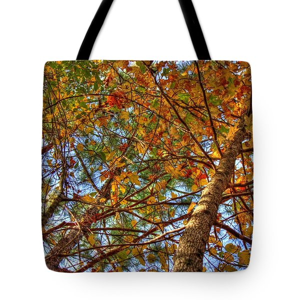 Fall Canopy Tote Bag by Barry Jones