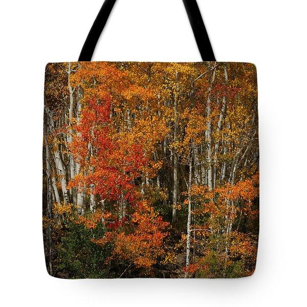 Fall Colors Grand Mesa Tote Bag by Ernie Echols