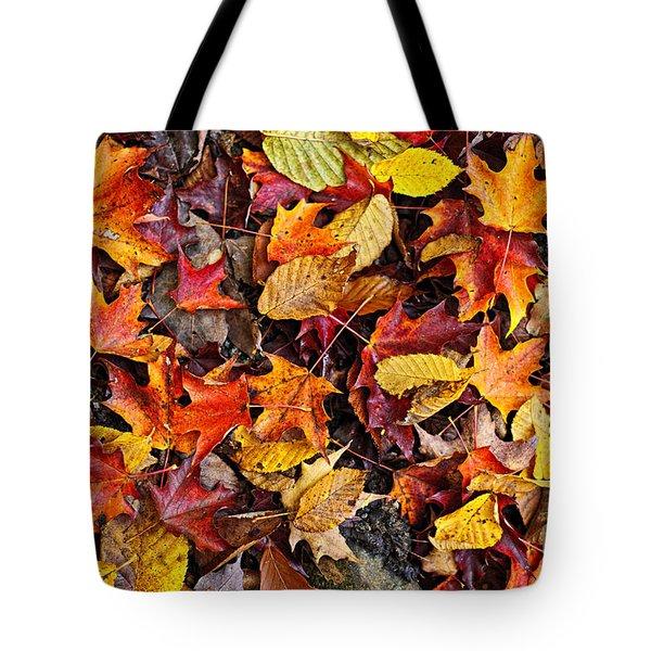 Fall leaves background Tote Bag by Elena Elisseeva