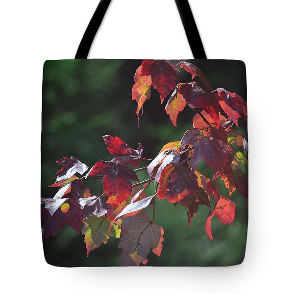 Fall Red Tote Bag by Sandi OReilly