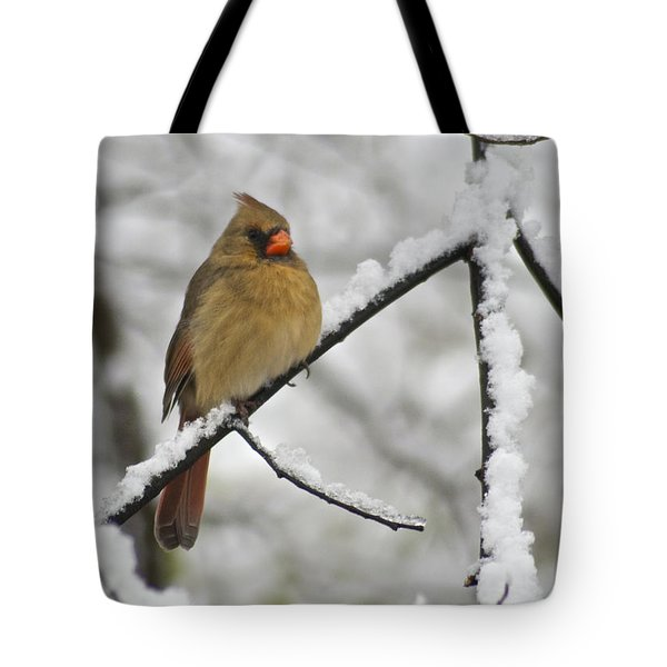 Female Cardinal 3656 Tote Bag by Michael Peychich