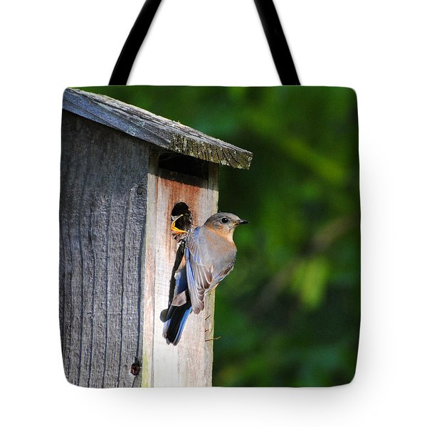 Female Eastern Bluebird IIi Tote Bag by Jai Johnson