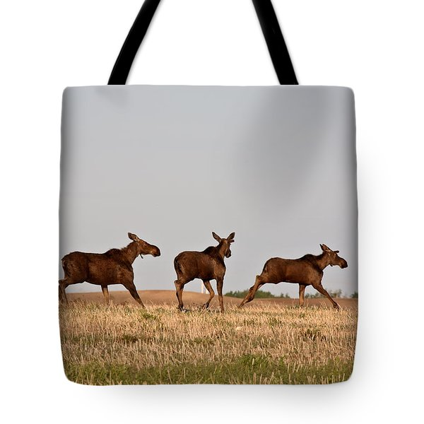 Female Moose With Male Calves In Saskatchewan Field Tote Bag by Mark Duffy