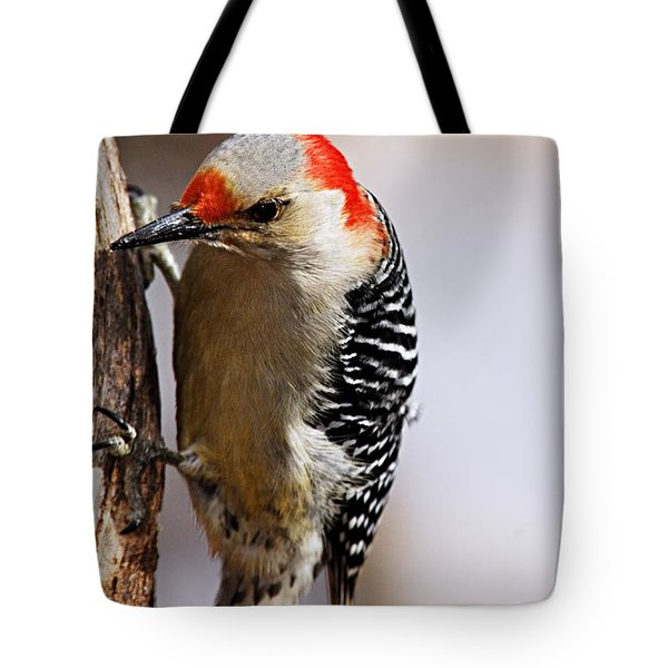 Female Red-bellied Woodpecker 3 Tote Bag by Larry Ricker