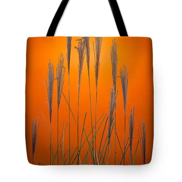 Fountain Grass In Orange Tote Bag by Steve Gadomski