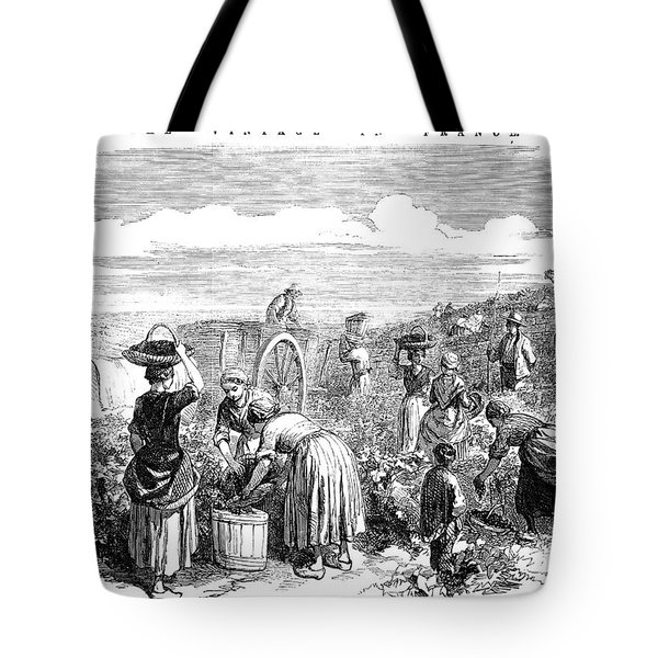 France: Grape Harvest, 1854 Tote Bag by Granger