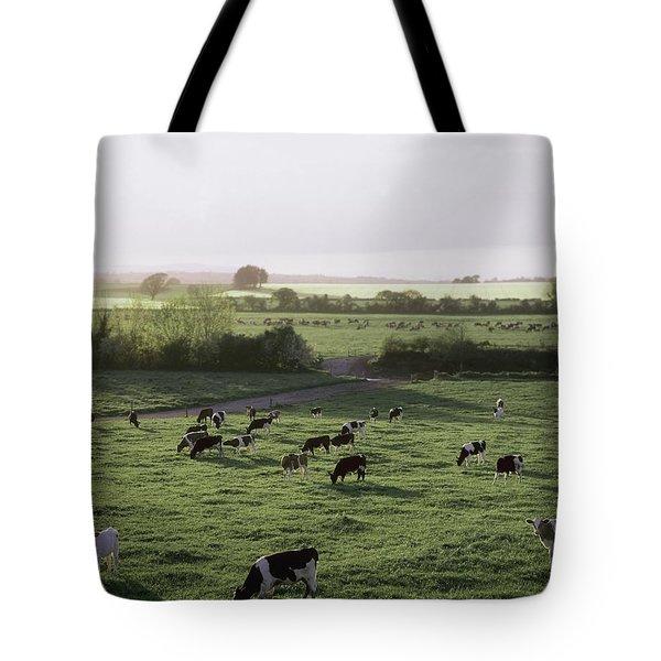Friesian Bullocks, Ireland Herd Of Tote Bag by The Irish Image Collection