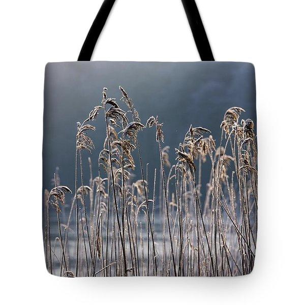 Frozen Reeds At The Shore Of A Lake Tote Bag by John Short