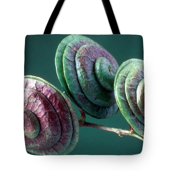 Fruits of Wild Lucerne Tote Bag by Nuridsany et Perennou and Photo Researchers