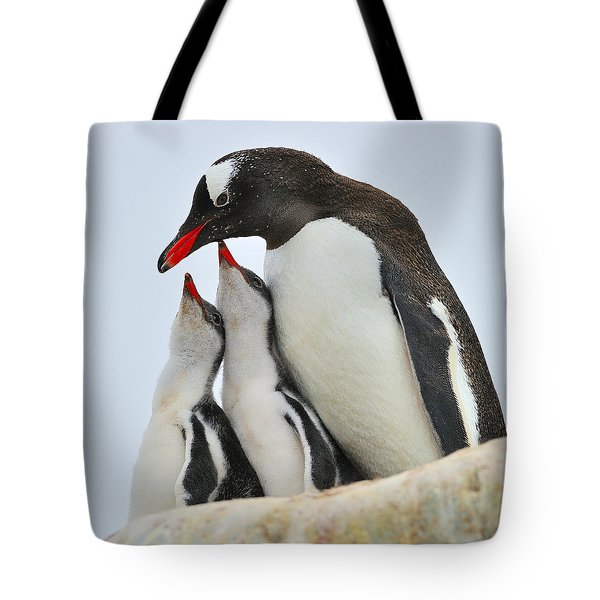 Gentoo Feeding Time Tote Bag by Tony Beck