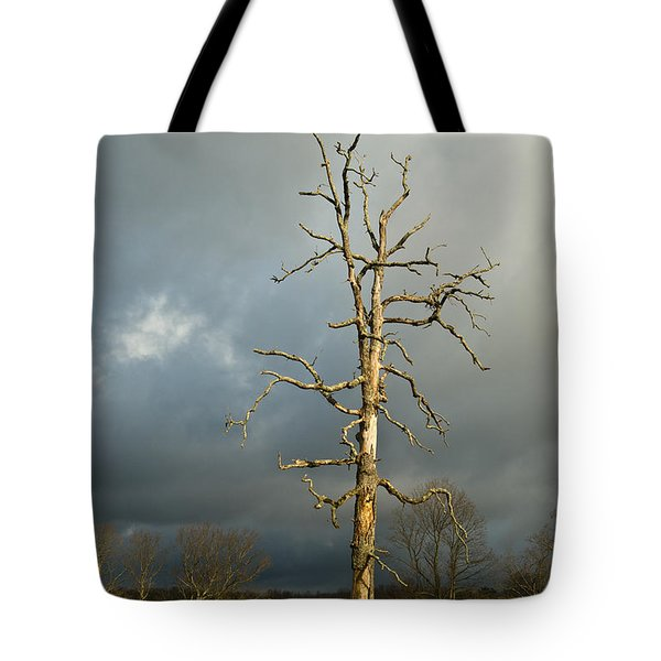 Ghost Tree Tote Bag by Douglas Barnett