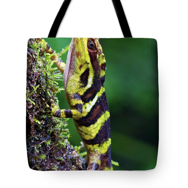 Giant Anole Dactyloa Microtus Male Tote Bag by James Christensen