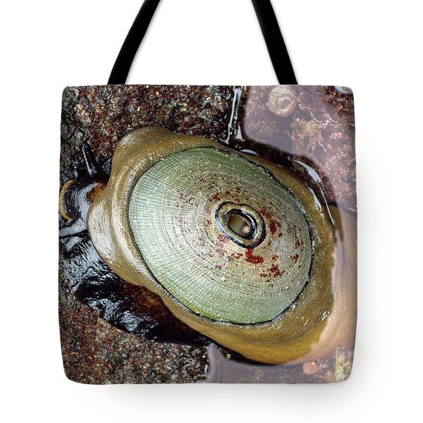 Giant Keyhole Limpet Tote Bag by Mariola Bitner