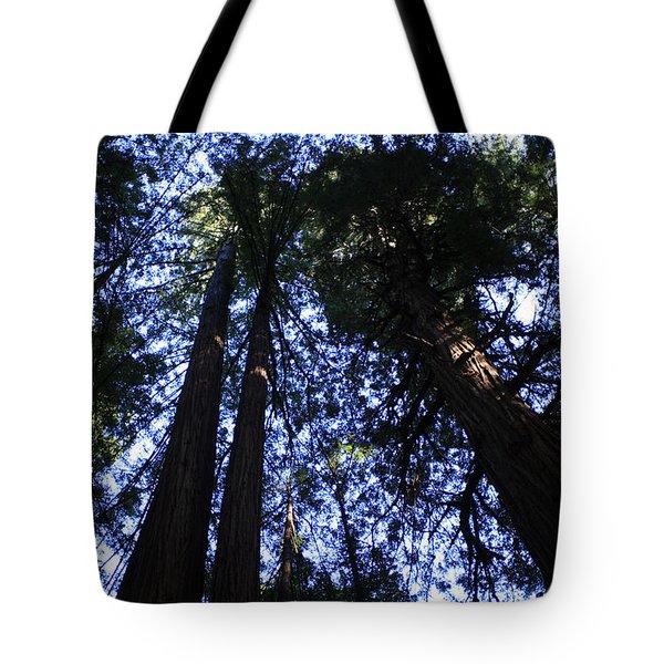 Giant Redwoods Tote Bag by Aidan Moran