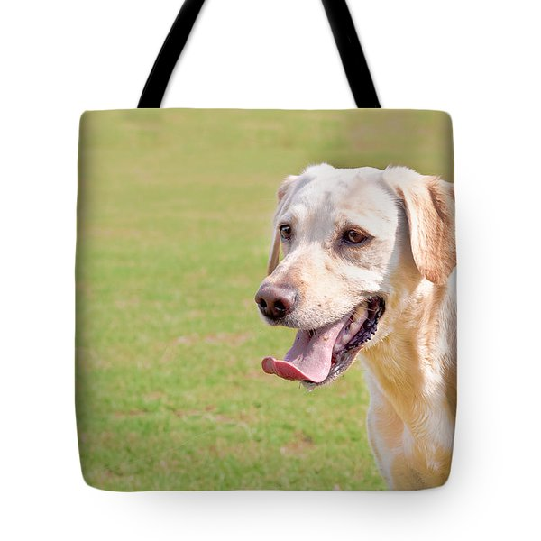 Golden labrador Tote Bag by Tom Gowanlock