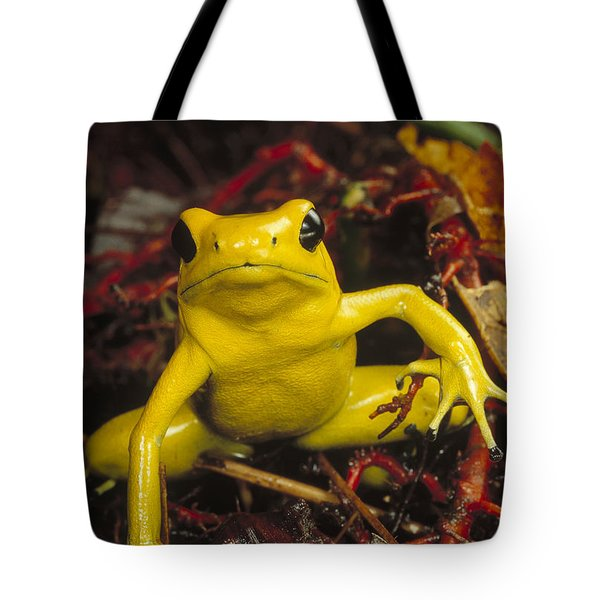 Golden Poison Dart Frog Phyllobates Tote Bag by Mark Moffett