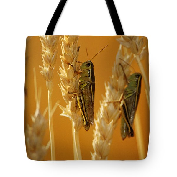 Grasshoppers On Wheat, Treherne Tote Bag by Mike Grandmailson