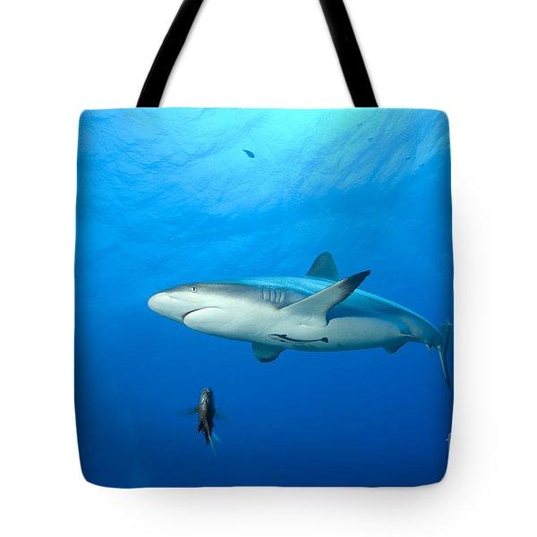 Gray Reef Shark. Papua New Guinea Tote Bag by Steve Jones