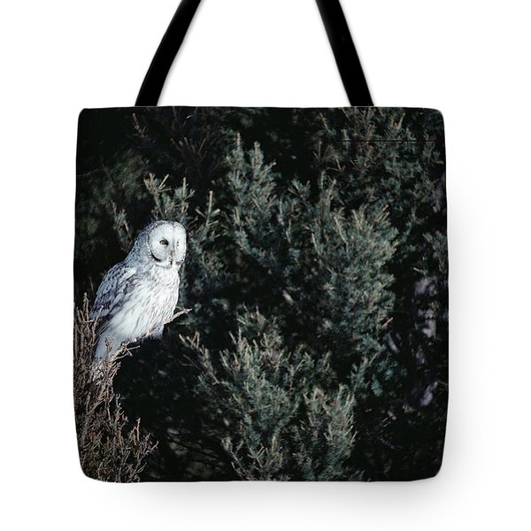 Great Gray Owl Strix Nebulosa In Blonde Tote Bag by Michael Quinton