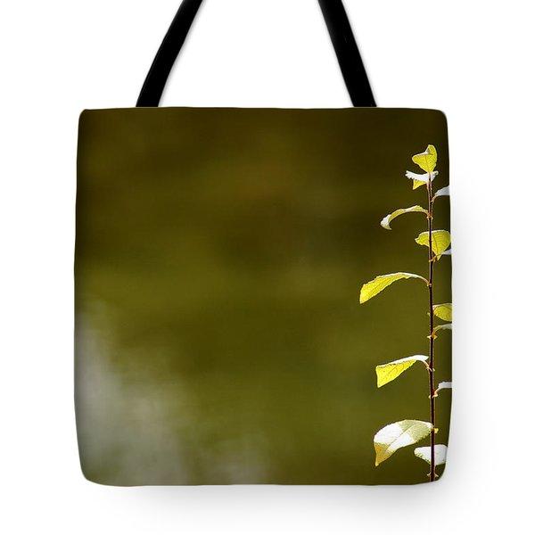 Green Morning Tote Bag by LeeAnn McLaneGoetz McLaneGoetzStudioLLCcom