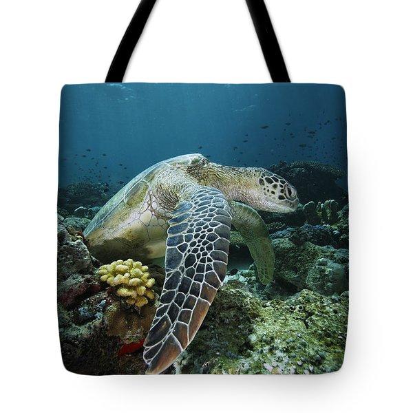 Green Sea Turtle Chelonia Mydas Tote Bag by Hiroya Minakuchi