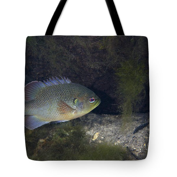 Green Sunfish Swimming Along The Rocky Tote Bag by Michael Wood