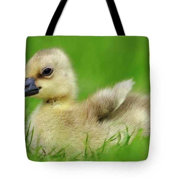 Greylag Goose Anser Anser Gosling Tote Bag by Cyril Ruoso
