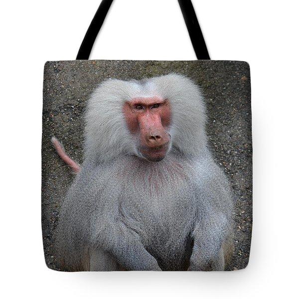 Hamadryas Baboon Tote Bag by Eva Kaufman