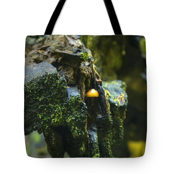 Hanging In There Tote Bag by Michael Peychich