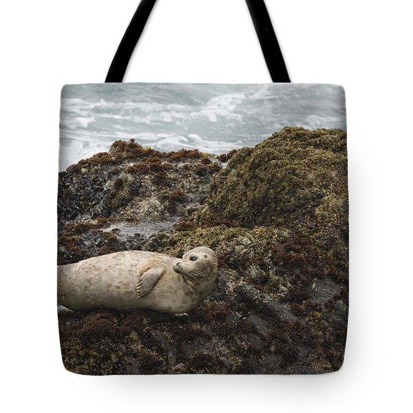 Harbor Seal  Point Lobos State Reserve Tote Bag by Sebastian Kennerknecht