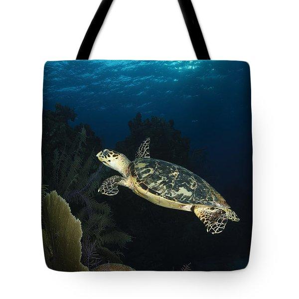 Hawksbill Sea Turtle Swimming Tote Bag by Todd Winner