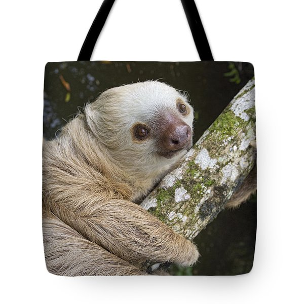 Hoffmanns Two-toed Sloth Costa Rica Tote Bag by Suzi Eszterhas