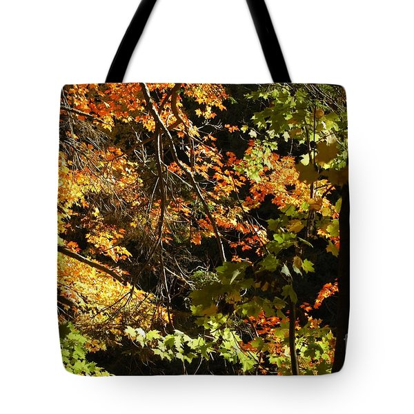 In The Woods Tote Bag by Kathleen Struckle