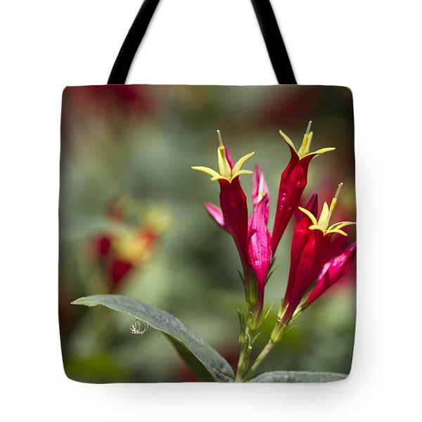 Indian Pink - Spigelia Marilandica - Firecracker Wildflowers Tote Bag by Kathy Clark