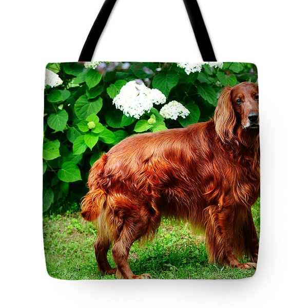 Irish Setter III Tote Bag by Jenny Rainbow