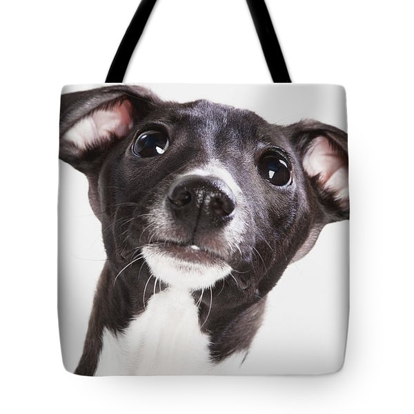 Italian Greyhound Puppy Spruce Grove Tote Bag by Leah Bignell