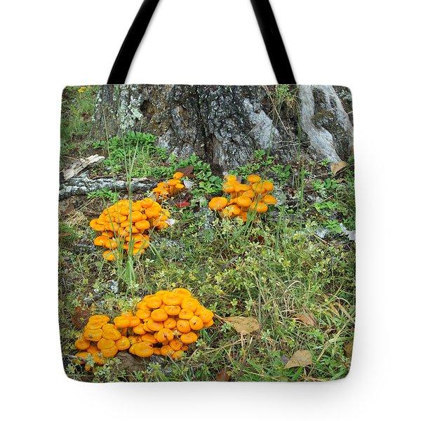 Jack Olantern Mushrooms 16 Tote Bag by Douglas Barnett