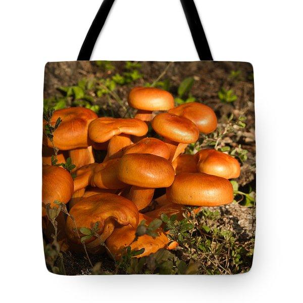 Jack Olantern Mushrooms 24 Tote Bag by Douglas Barnett