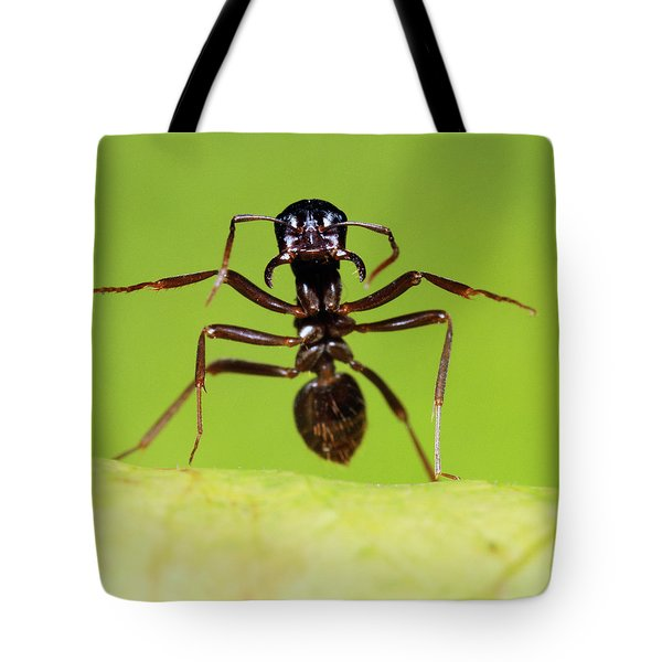 Japanese Slave-making Ant Polyergus Tote Bag by Satoshi Kuribayashi