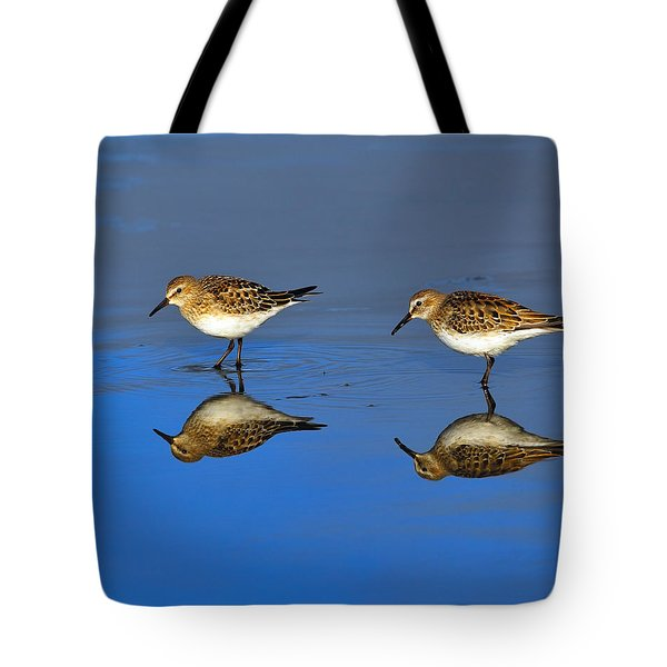Juvenile White-rumped Sandpipers Tote Bag by Tony Beck