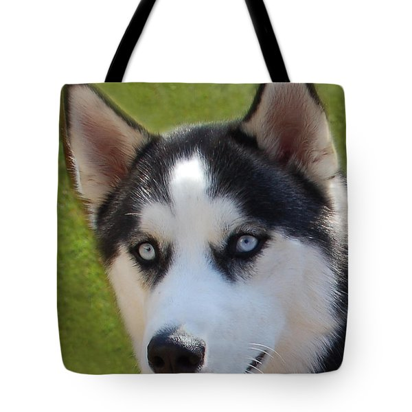 Kodi Tote Bag by Aimee L Maher Photography and Art