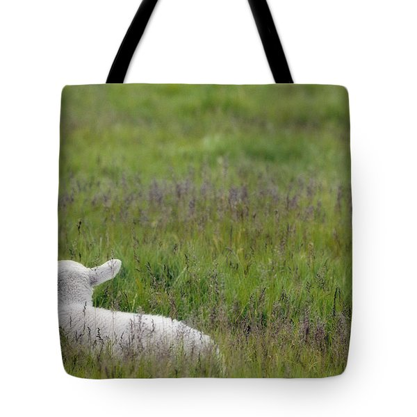 Lamb In Pasture, Alberta, Canada Tote Bag by Darwin Wiggett