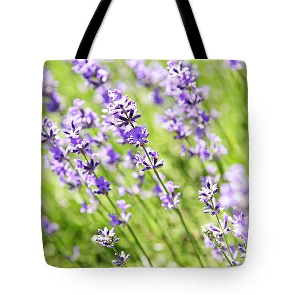 Lavender in sunshine Tote Bag by Elena Elisseeva