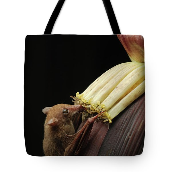 Lesser Long-tongued Fruit Bat Tote Bag by Ch'ien Lee