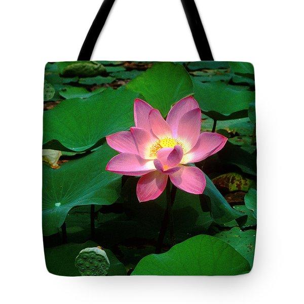 Lotus Flower And Capsule 24a Tote Bag by Gerry Gantt