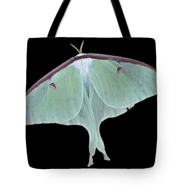 Luna Moth Tote Bag by Paul Ward