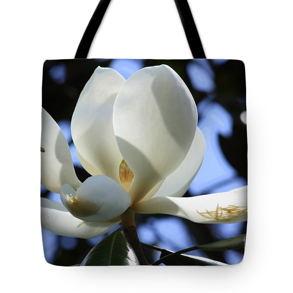 Magnolia in Blue Tote Bag by Carol Groenen