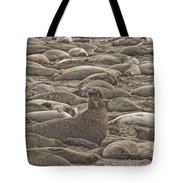 Male Elephant Seal Barking Amidst Tote Bag by Robert Postma