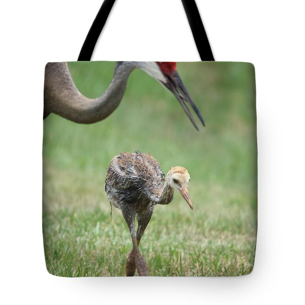 Mama and Juvenile Sandhill Crane Tote Bag by Carol Groenen